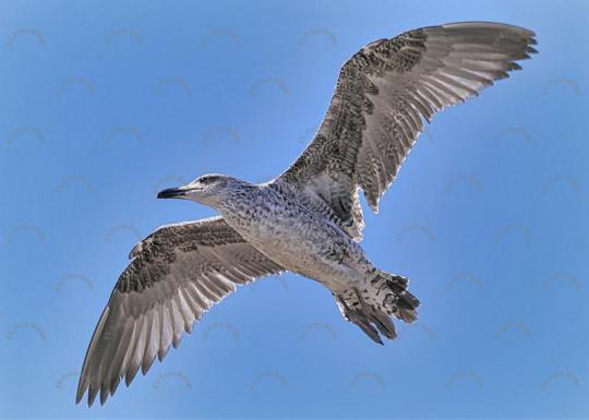 Vogel Möwe