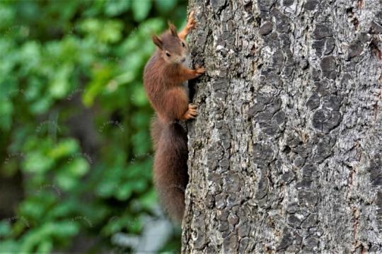 Eichhörnchen auf ein Baumstam