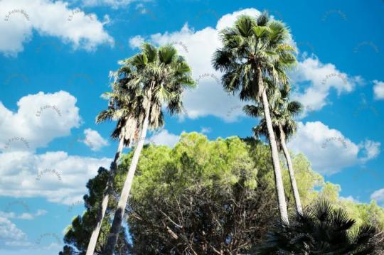 Palmen Spanien