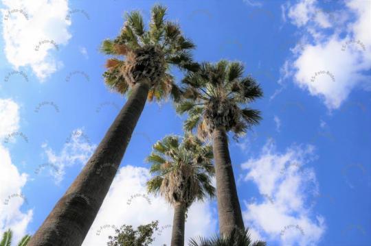 Palmen Spanien Mallorca