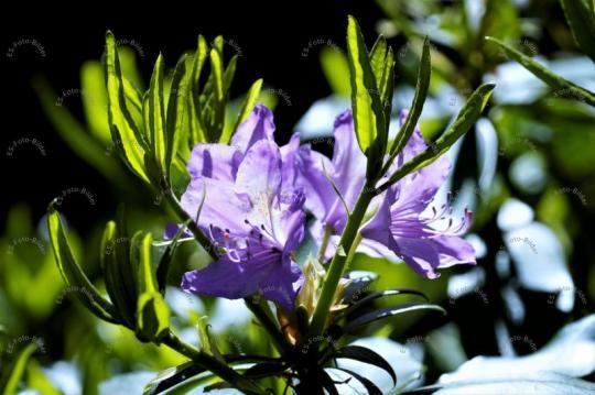 Blumen Pflanze