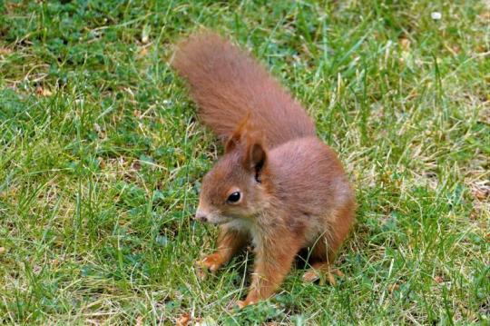 Eichhörnchen Foto Bild