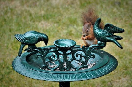 Eichhörnchen auf einer Vogeltränke