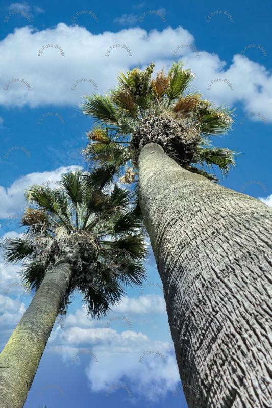 zwei Palmen Foto Bild