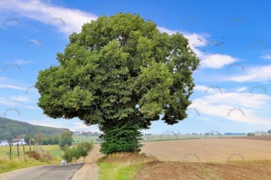 Foto Baum Sauerland