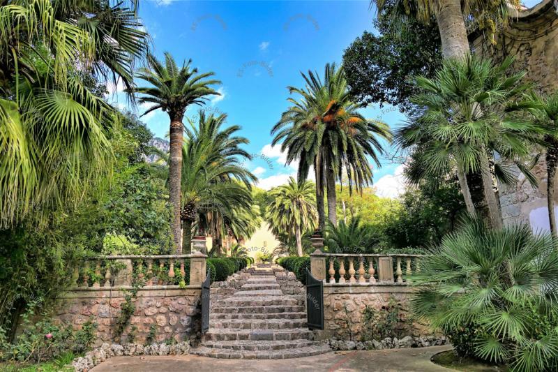 Palmen Garten Spanien