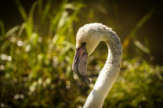 Flamingo Stockfoto Bild