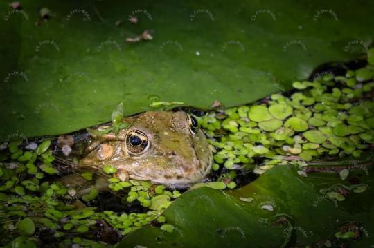 Frosch Foto Bild