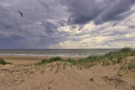 Naturschutzgebiet  Holland Nordsee Dünen