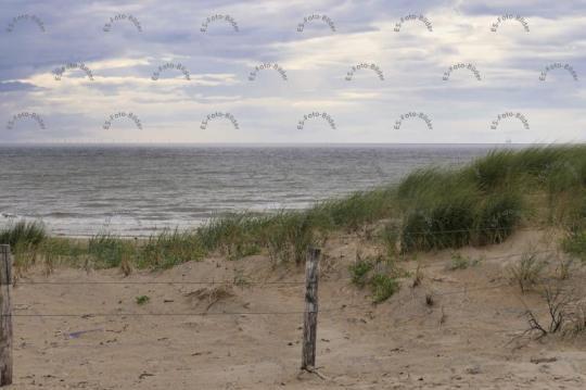 Holland Zandvoort Strand Dünen Foto Bild