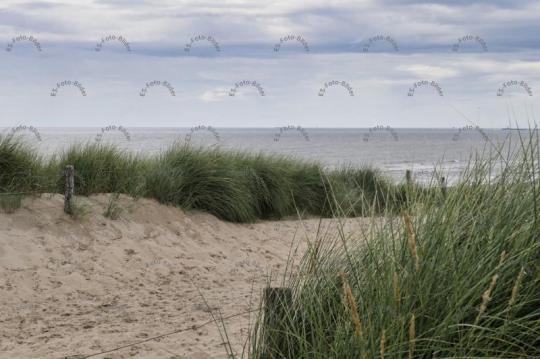 Holland Strand Dünen Foto Bild